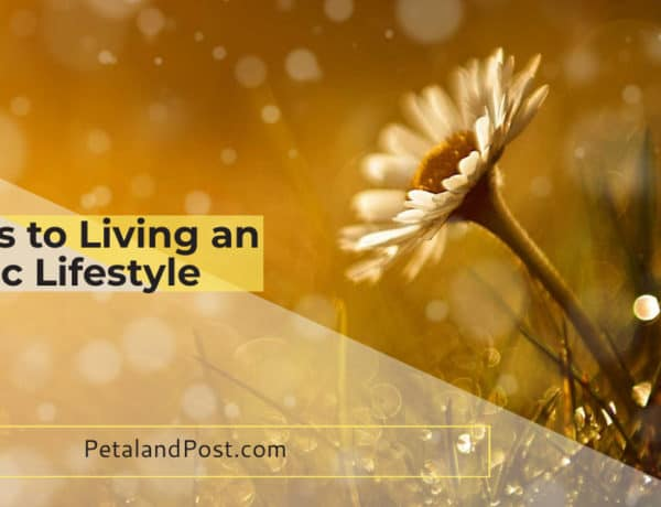11 Steps Living An Organic Life